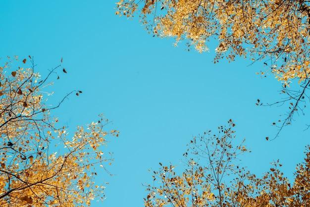 Lage hoek die van geel doorbladerde bomen is ontsproten met een blauwe hemel op de achtergrond
