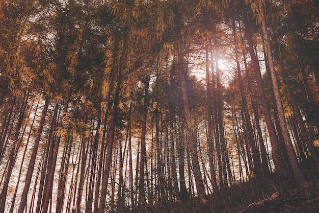 Lage hoek die van hoge bomen met kleurrijke bladeren in san valentino in de avond is ontsproten