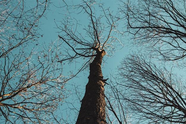 Lage hoek die van hoge bomen tegen een blauwe hemel overdag is ontsproten