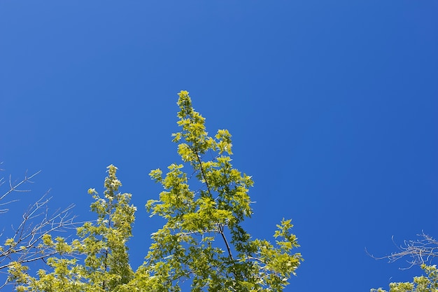 Lage hoek die van hoge groene bomen met een duidelijke blauwe hemel is ontsproten