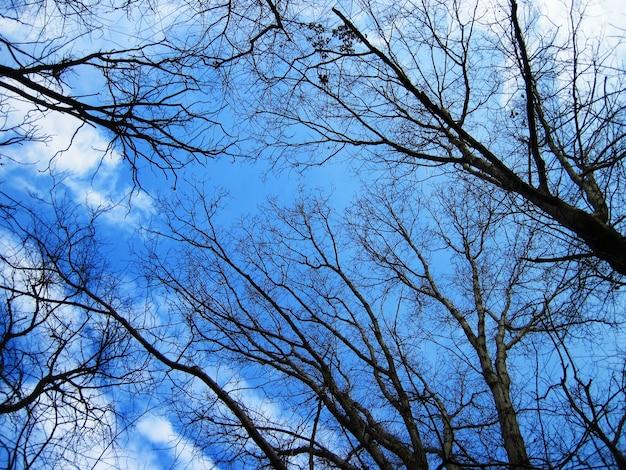 Lage hoek die van kale bomen in het bos met een blauwe hemel is ontsproten