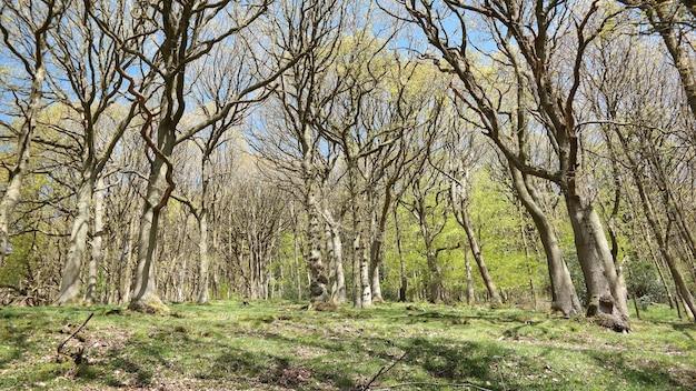 Lage hoek die van kale bomen is ontsproten tijdens de lente op een zonnige dag