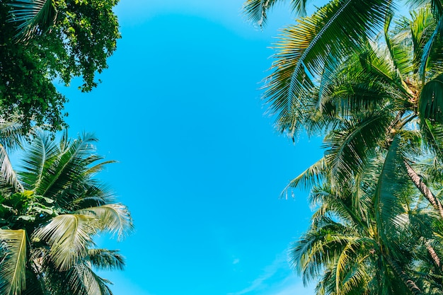 Lage hoek die van mooie kokosnotenpalm is ontsproten op blauwe hemel