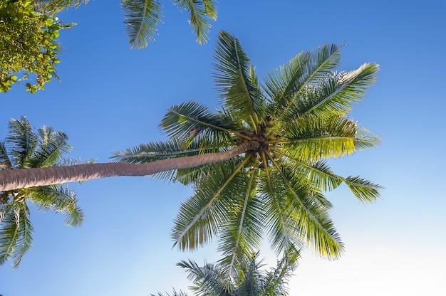 Lage hoek die van mooie tropische palmen onder de zonnige hemel is ontsproten