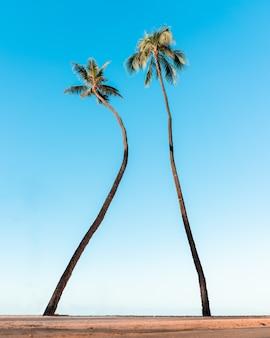 Lage hoek die van palmbomen onder de mooie blauwe hemel is ontsproten