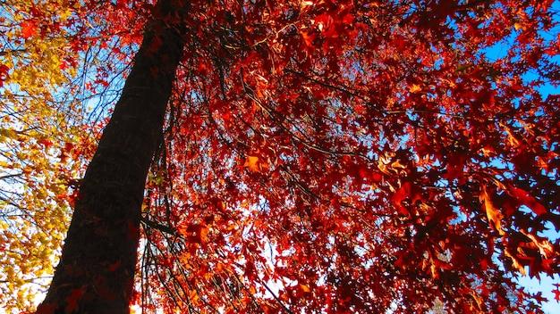 Lage hoek die van rode de herfstbladeren op een boom is ontsproten