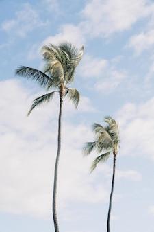 Lage hoek die van twee palmbomen met een bewolkte blauwe hemel is ontsproten