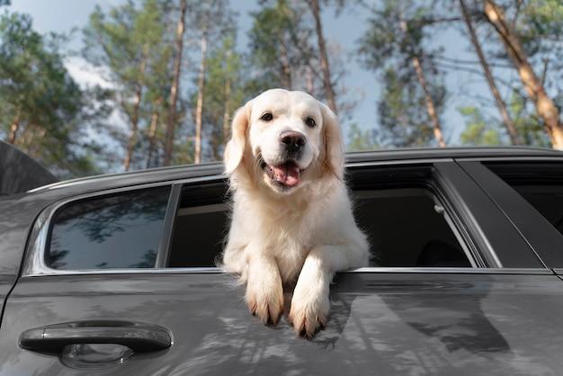 Lage hoek gelukkige hond in auto
