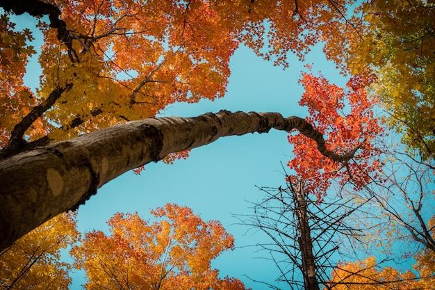 Lage hoek shot van bomen bedekt met kleurrijke bladeren onder het zonlicht en een blauwe lucht in de herfst