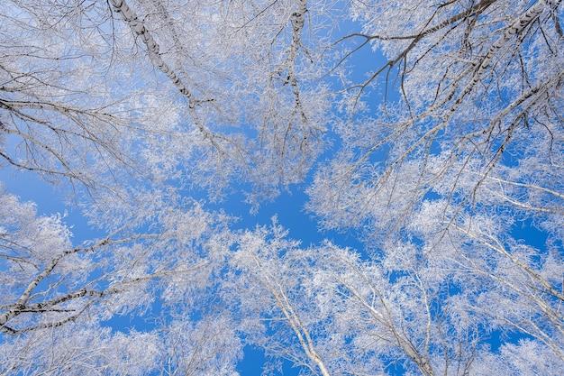 Lage hoek shot van bomen bedekt met sneeuw met een heldere blauwe lucht op de achtergrond
