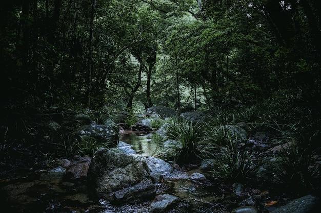 Lage hoek shot van een kleine rivier vol rotsen in het midden van een bos