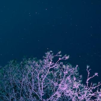 Lage hoekboom met sterrige nachtachtergrond