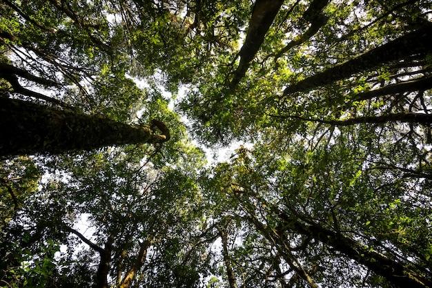 Lage hoekmening opzoeken van overvloed tropische bosboom met groene bladeren in de berg.