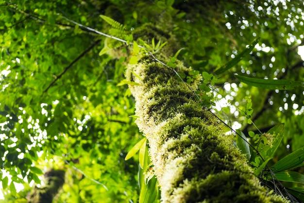 Lage hoekmening van boomstam met groen mos