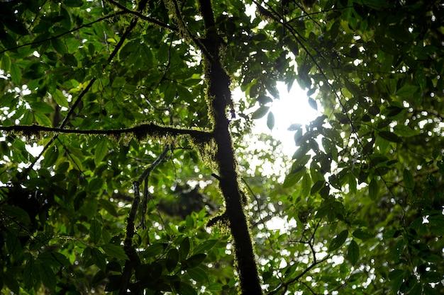 Lage hoekmening van boomtak met mos in het regenwoud van costa rica