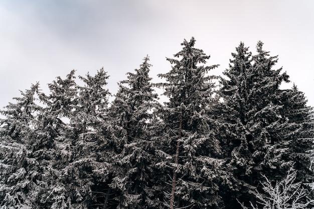 Lage hoekmening van de alpine heuvels van de winter met uitzicht op dennen- en dennenbos vanuit het bergdorp. pittoreske reizen, wandelen, seizoensgebonden, natuur en platteland schoonheid concept achtergrondscène