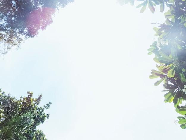 Lage hoekmening van de hemel en de boom