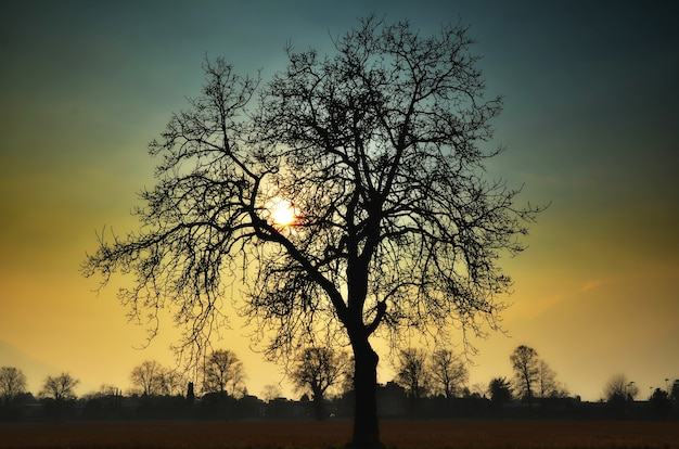Lage hoekmening van een boomsilhouet op een prachtige zonsondergangachtergrond