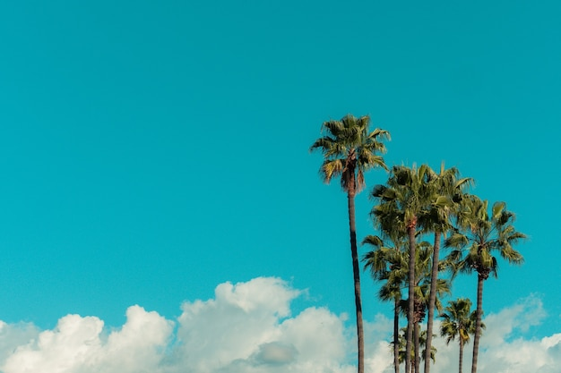 Lage hoekmening van palmbomen onder een blauwe lucht en zonlicht overdag