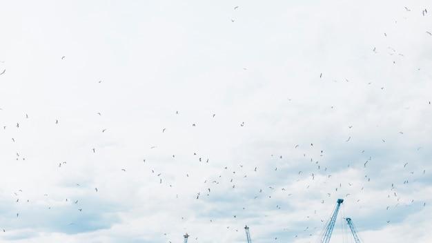 Lage hoekmening van zeemeeuwen die in de hemel vliegen