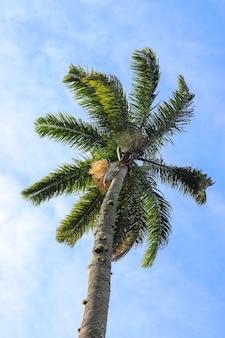Lage hoekopname van de hoge palmboom die glinstert onder de blauwe lucht