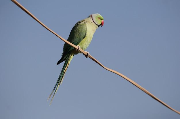 Lage hoekopname van een groene papegaai die op een geïsoleerde paal zit