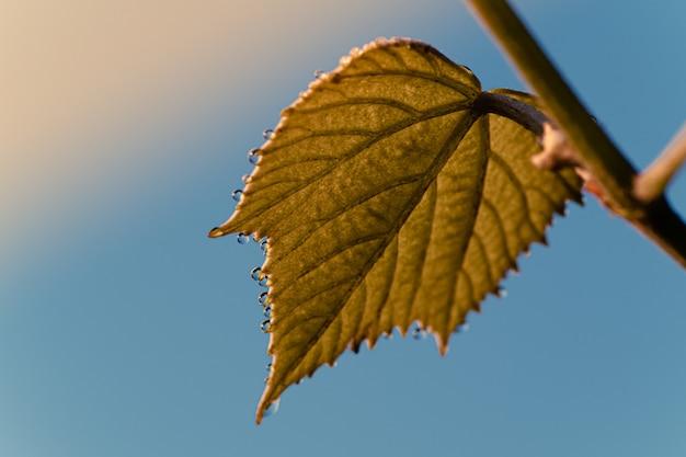 Lage hoekopname van een herfstblad met een blauwe lucht