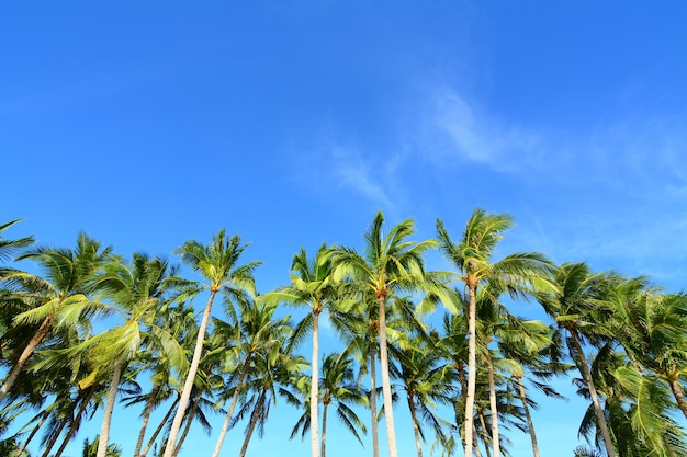 Lage hoekopname van palmbomen aan de heldere blauwe lucht