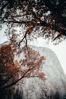 Lage hoekscène van bomen met oranjekleurige bladeren in de herfst met een mistige rots op de achtergrond