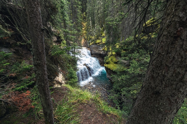 Lagere watervallen die in johnston canyon in banff national park stromen