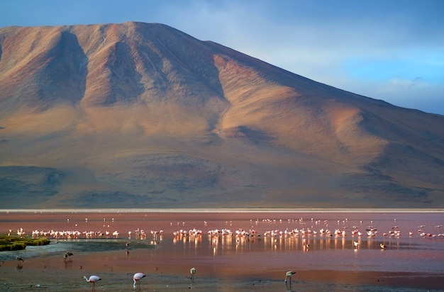 Laguna colorada of red lagoon met flamingo's, zoutmeer op altiplano-plateau, bolivia
