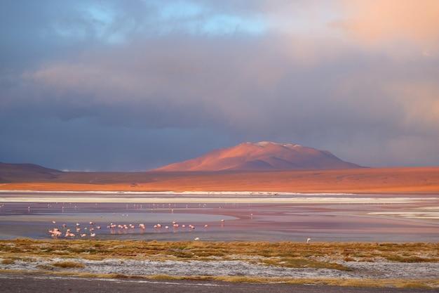 Laguna colorada of red lagoon op boliviaanse altiplano met grote groep flamingo's, bolivia, zuid-amerika