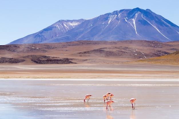 Laguna honda-landschap, bolivia. prachtig boliviaans panorama. blauwe waterlagune