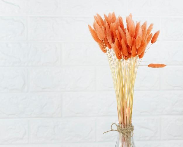 Lagurus plant geïsoleerd op achtergrond