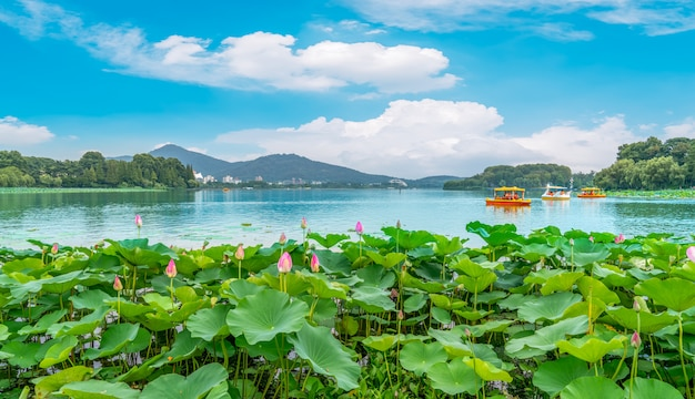 Lake lotus pond and landscape scenery