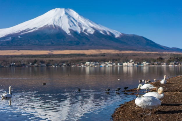 Lake mount fuji view