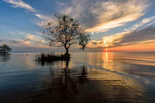 Lamphu-boom op het water, phatthalung-provincie