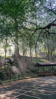 Lan sang nationaal park in thailand. mobiele foto, reislicht