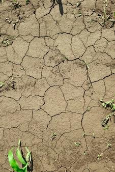 Land bedekt met scheuren als gevolg van droogte