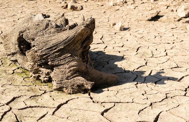 Land met droge en gebarsten grond, met een oud droog houtblok. achtergrondstructuur.