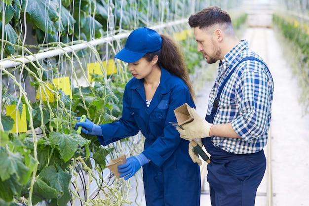 Landarbeiders op plantage
