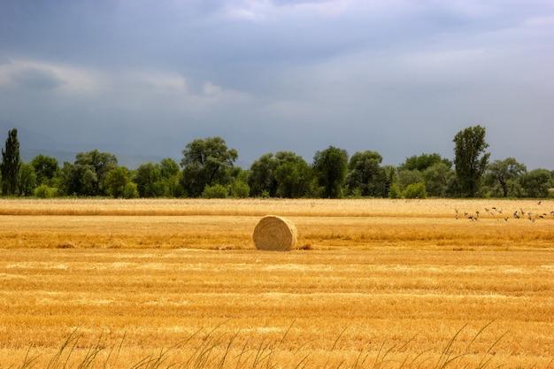 Landbouw boerderij veld hooiberg rustig landschap oogsttijd op een landbouwveld in almaty