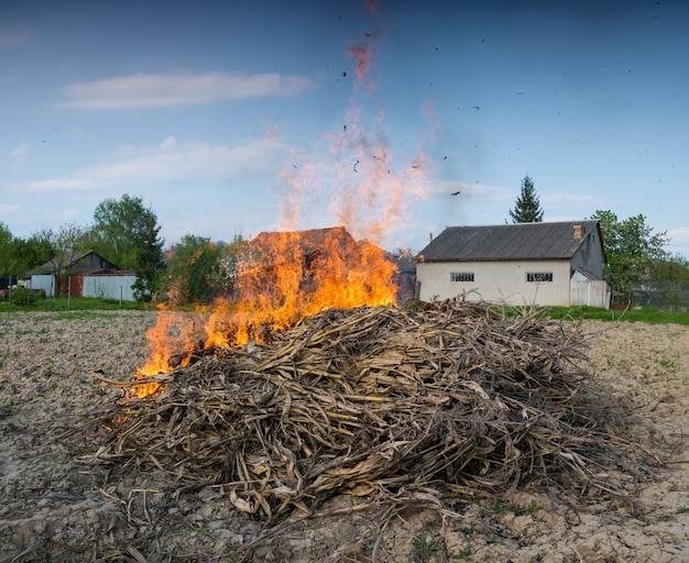 Landbouw concept. brandende stapel droge maïs