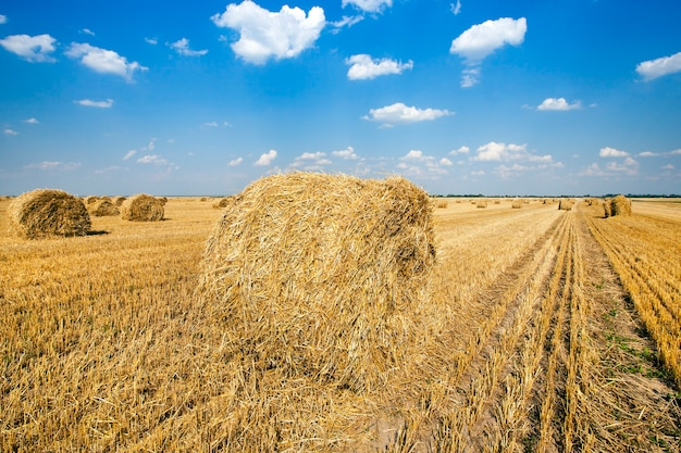 Landbouw - een landbouwveld waarop een stapel ligt na het schoonmaken van granen