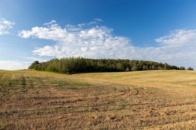 Landbouw en landbouw voor de teelt van granen voor de productie van graan, tarwe of roggekorrel wordt gebruikt voor de bereiding van voedingsproducten