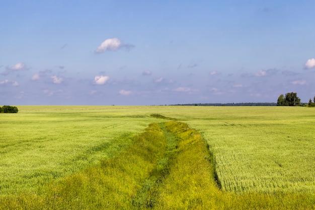 Landbouw voor de teelt van granen voor de productie van graan