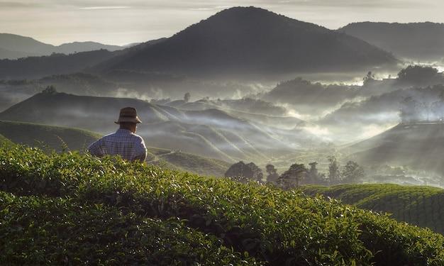 Landbouwer bij theeaanplanting in het concept van maleisië