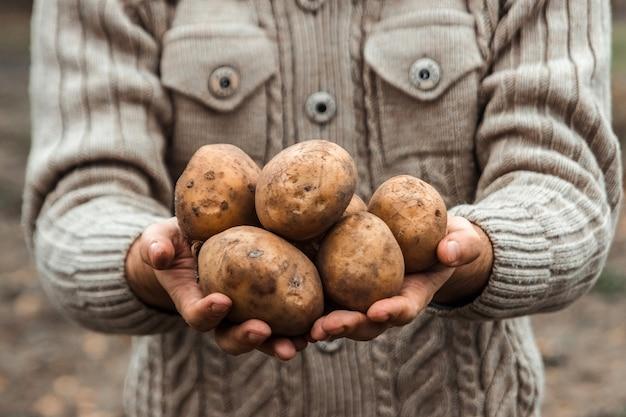 Landbouwer die de oogst van aardappels in de tuin in handen houdt. organische groenten. landbouw.