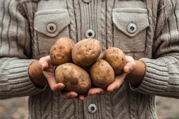Landbouwer die de oogst van aardappels in de tuin in handen houdt.