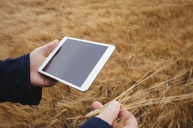 Landbouwer die digitale tablet gebruiken terwijl het controleren van oren van tarwe